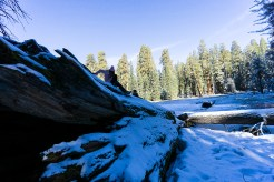 3-31-2016_The_Great_Spring_Break_Road_Trip_of_2016-Death_Valley-Sequoia-Yosemite__DSC2572