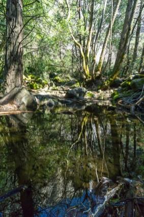4-1-2016_The_Great_Spring_Break_Road_Trip_of_2016-Death_Valley-Sequoia-Yosemite__DSC10199