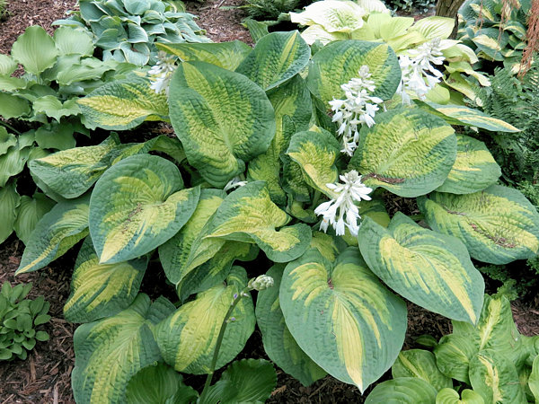 Brother Stefan Hostas On The Bluff
