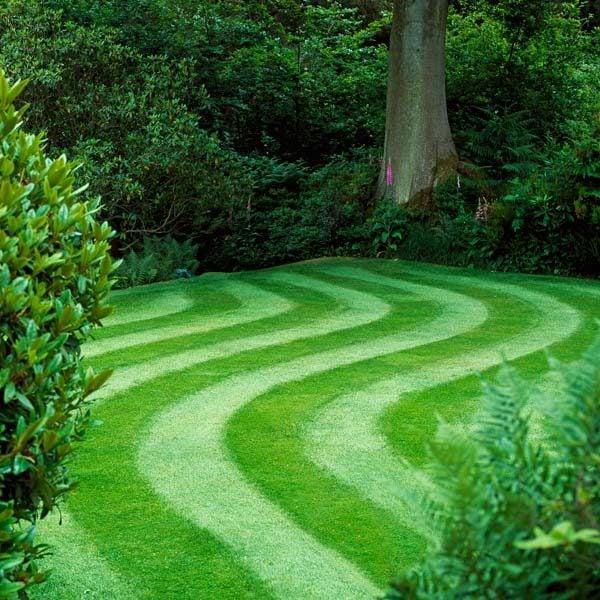 perfect lawn maintenance