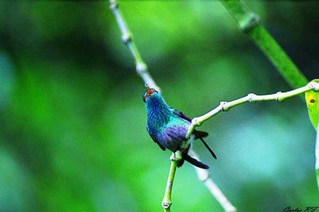 Bird Watching Tours From: $110.00 p/p