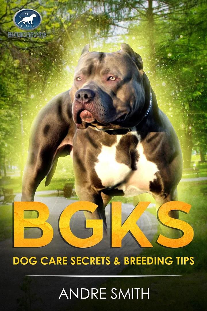 Hulk Puppies Price : puppies, price, Pitbull, Puppies