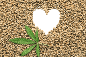 How to Choose the Right Hemp Seeds 2
