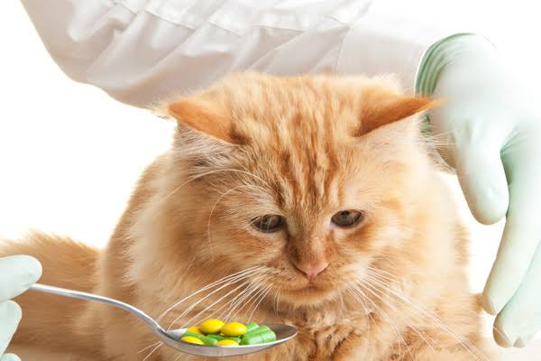 CBD for Cats: Benefits, Side Effects and Uses 12