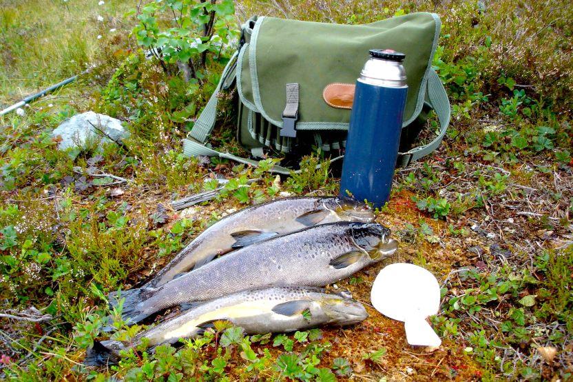 Fin öringsfångst. Fiske i Hotagsbygden - naturlig lyx! Foto Barbro Mlekus