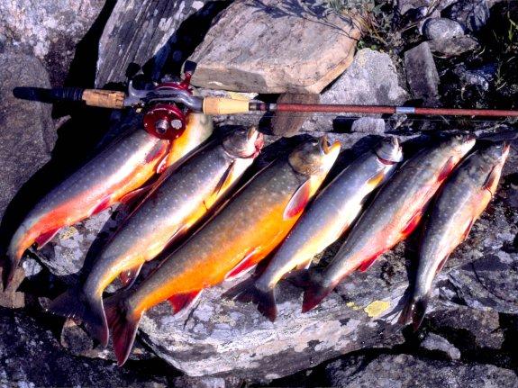 Lyckat rödingsfiske i Hotagsbygden. Foto Kjell-Erik A