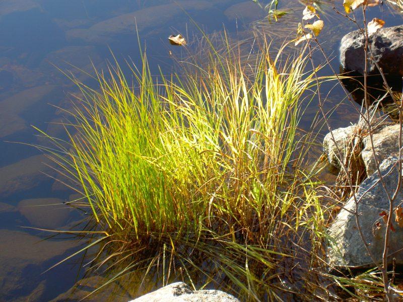 En av alla våra friska sjöar i Hotagsbygden. Foto Maritha Grelsson