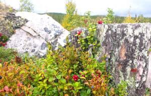 Skogens skafferi. Foto Maritha Grelsson