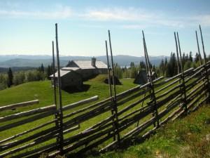 Levande fäbod i Hotagbygden. Foto Myhrbodarna