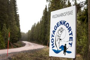 I Hotagenkortsland. Foto Anders Lundin