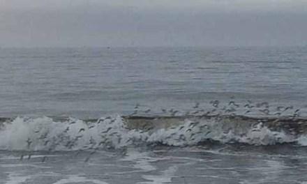 Studies say Atlantic Ocean's circulation slowing dramatically, increasing climate change fears