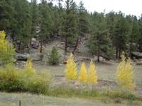 Fall Season 2009