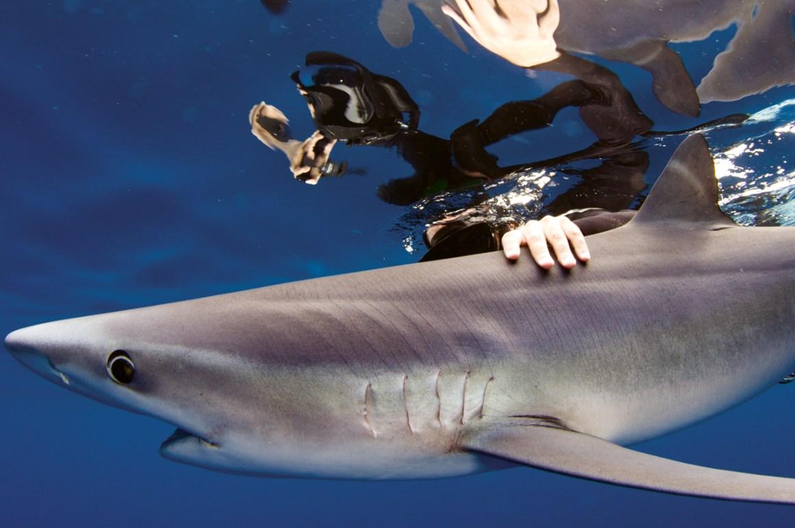El llamado del tiburón - galeria1_portada_home