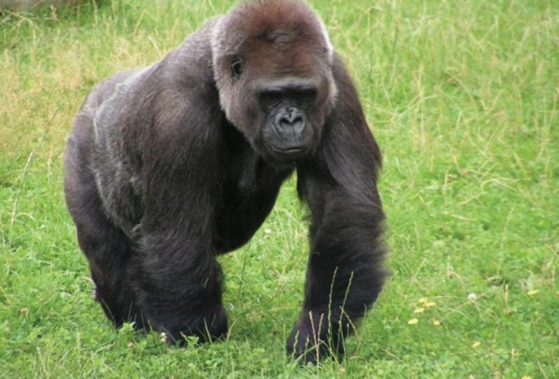 10 animales en peligro de extinción - animales_galeria011-1024x696