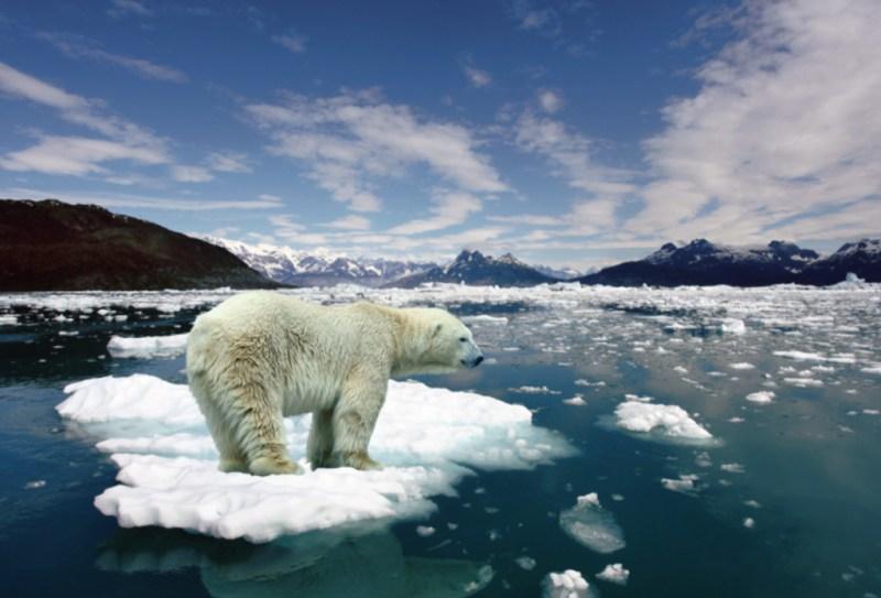 10 animales en peligro de extinción - animales_galeria02-1024x696