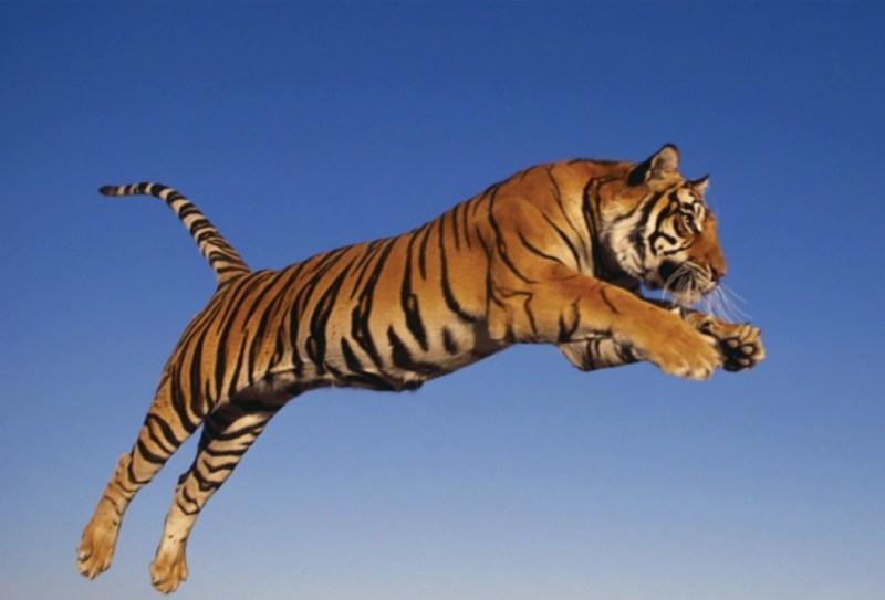 10 animales en peligro de extinción - animales_galeria07-1024x696