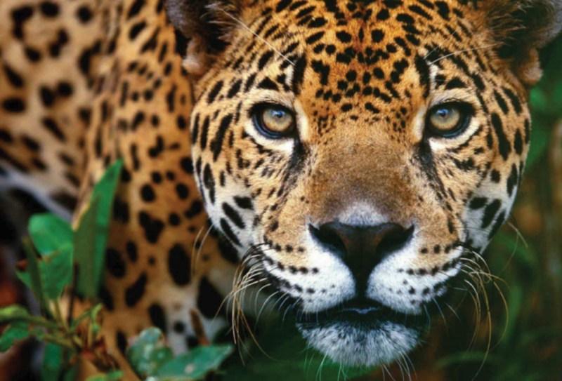 10 animales en peligro de extinción - animales_galeria08-1024x696