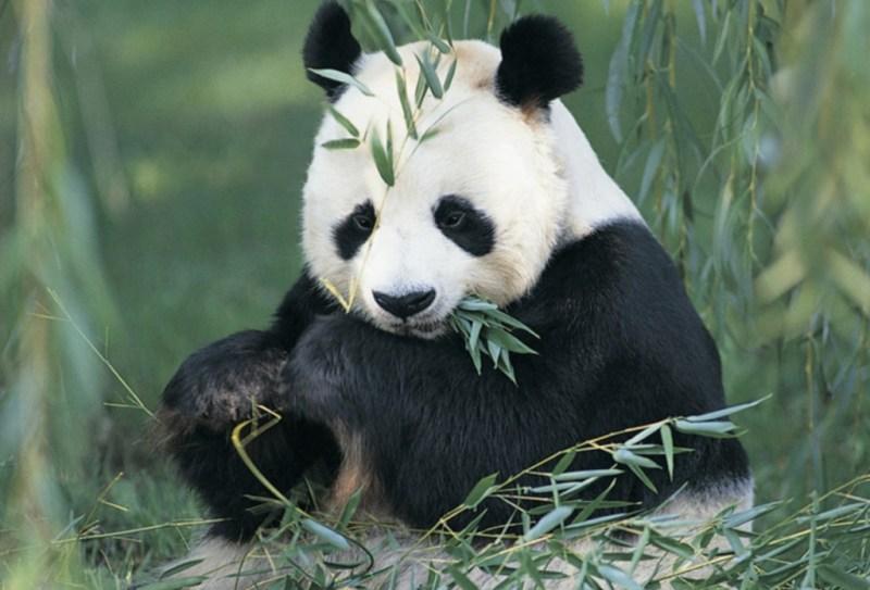 10 animales en peligro de extinción - animales_galeria10-1024x696