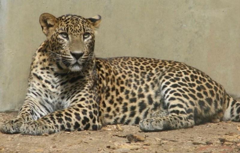 ANIMALES EN PELIGRO DE EXTINCIÓN - extincion_03-1024x655