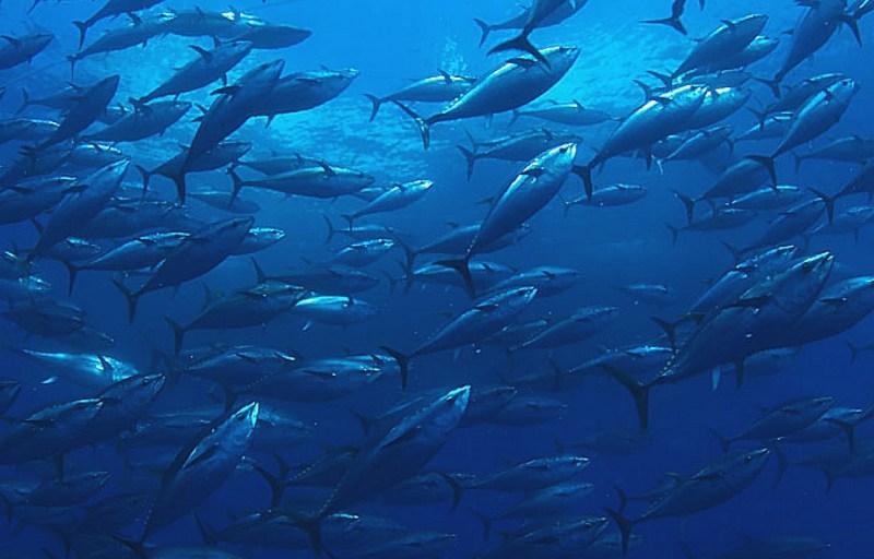 10 animales en peligro de extinción - extincion_05