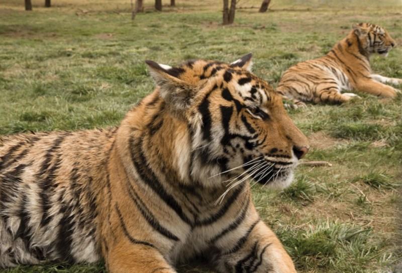 Black Jaguar White Tiger Foundation - bj10-1024x696