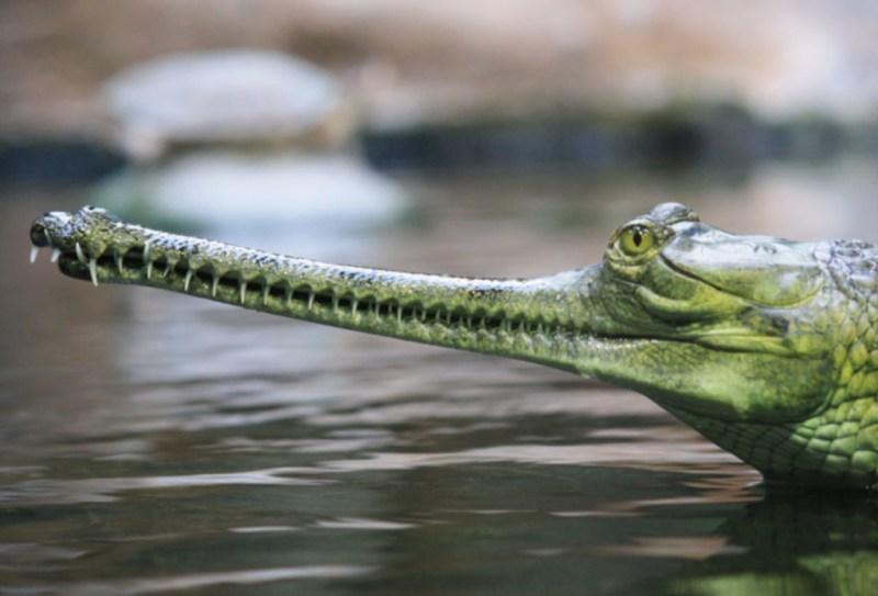 La especies más exóticas del mundo - ee10-1024x696