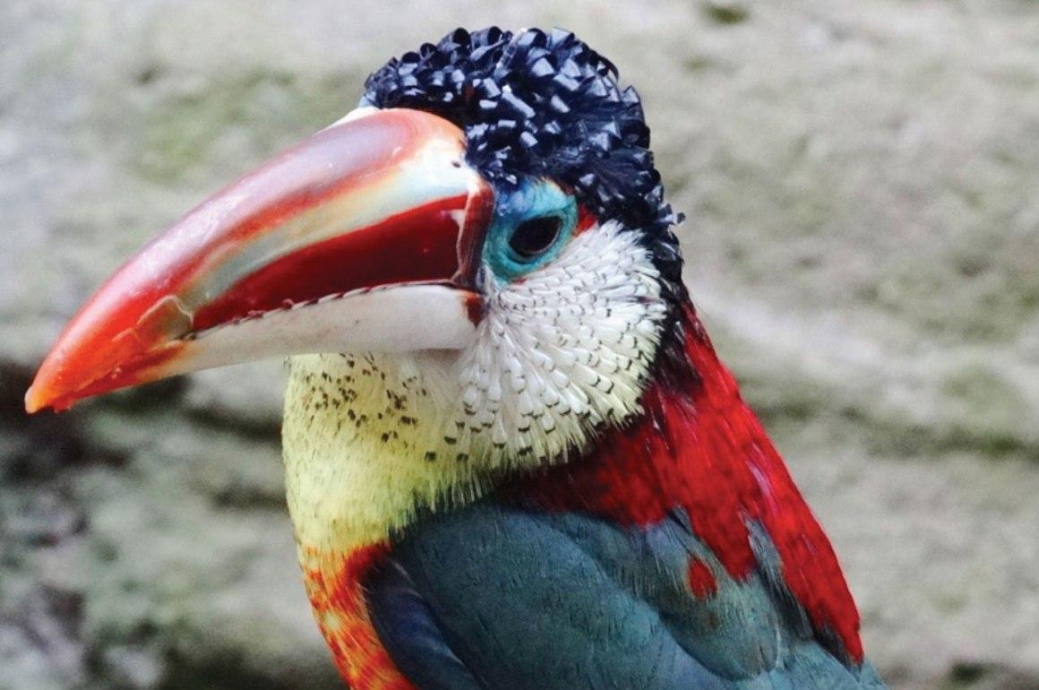 La especies más exóticas del mundo - ee7
