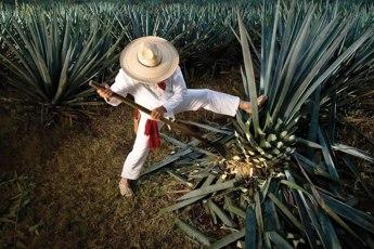 Herradura Ultra: el tequila de lujo contemporáneo - portada_herradura