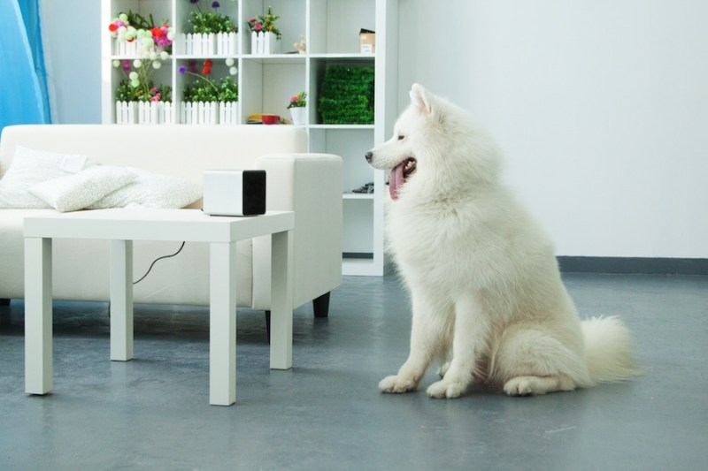 10 gadgets para disfrutar con tu perro  - petcube_look21