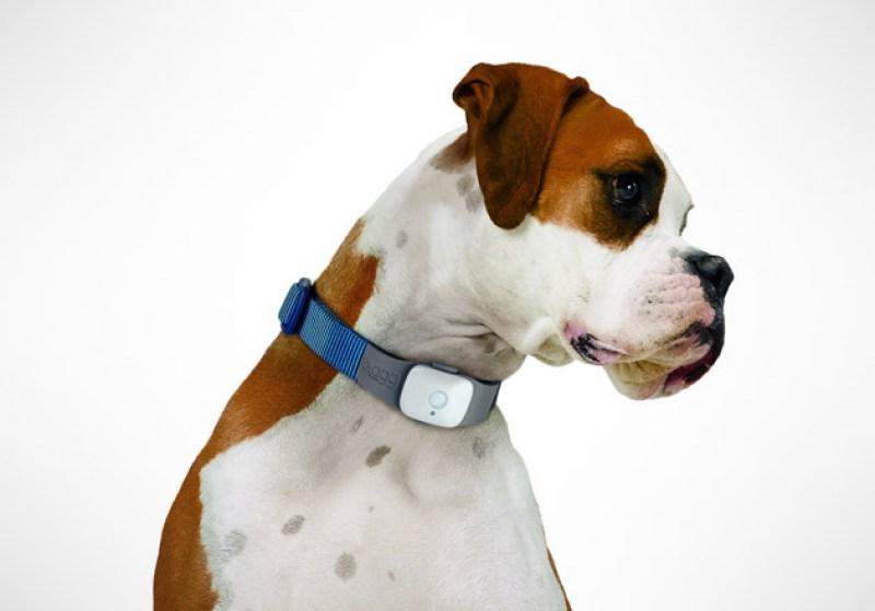 10 gadgets para disfrutar con tu perro  - tagg-pet-tracker