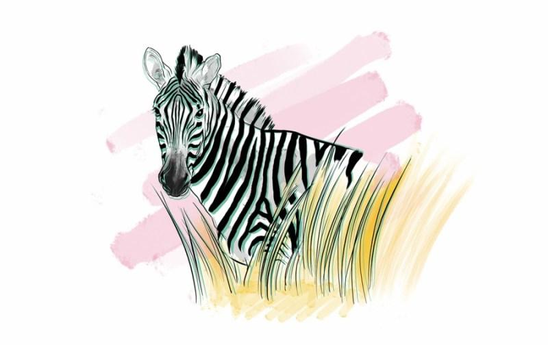 Safari Etiquette - foto554