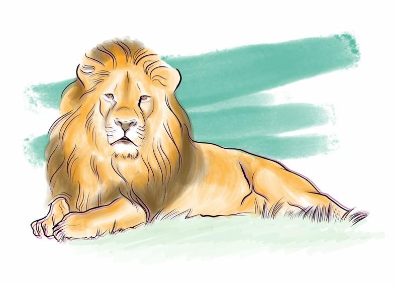 Safari Etiquette - portada111