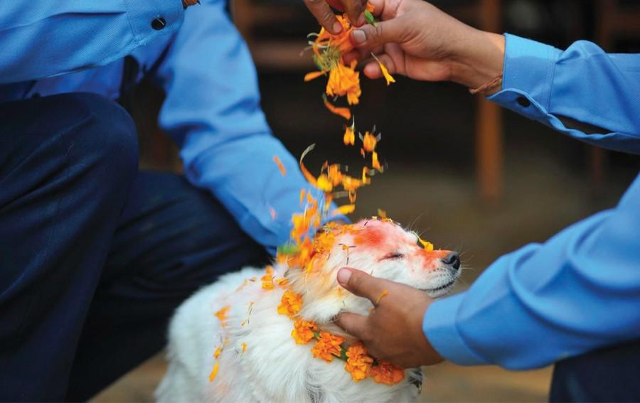 Los festivales de animales más curiosos del mundo - 1portada