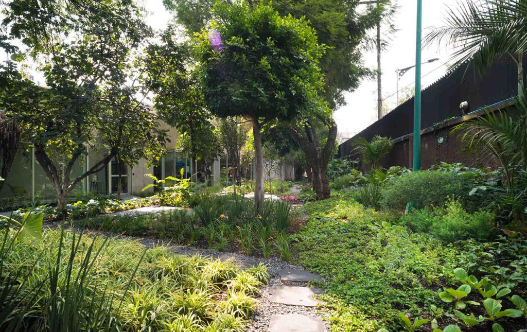 Paisajismo, el arte de decorar con plantas. - backyard