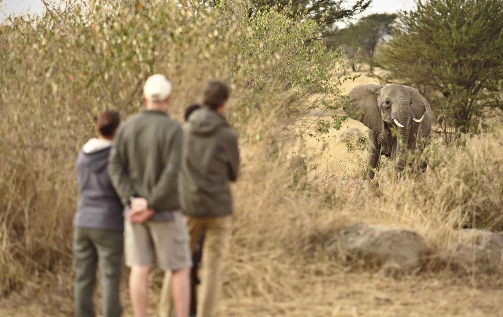 Safaris en Tanzania - walking-safari-nov17