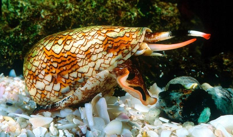 Los animales más peligrosos del mundo - conesnail