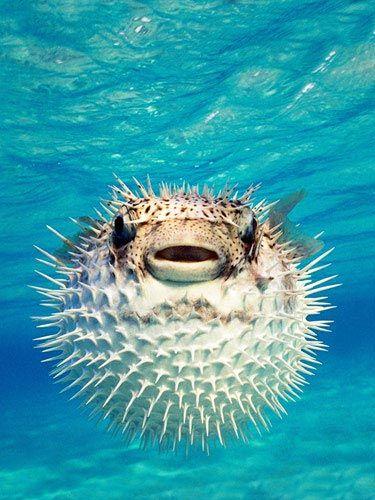 Los animales más peligrosos del mundo - pezglobo