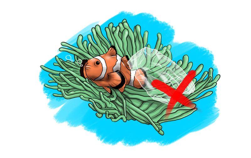 HOTetiquette Buceo - fish