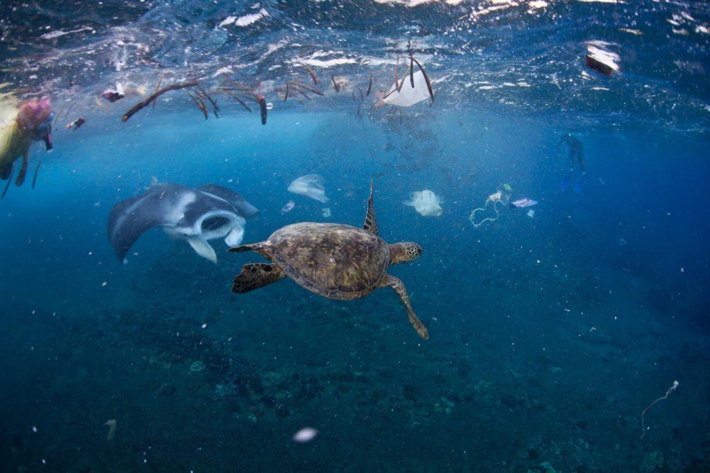 El problema de la basura en los océanos - 3. Especies Marinas