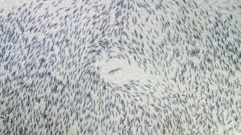 Las fotos más impresionantes tomadas por drones - drone-photos-7
