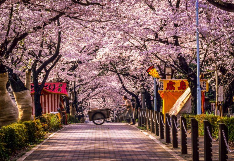 Guía para visitar Tokio - guia-tokio-1