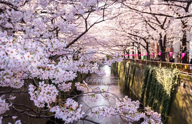 Guía para visitar Tokio - guía tokio portada