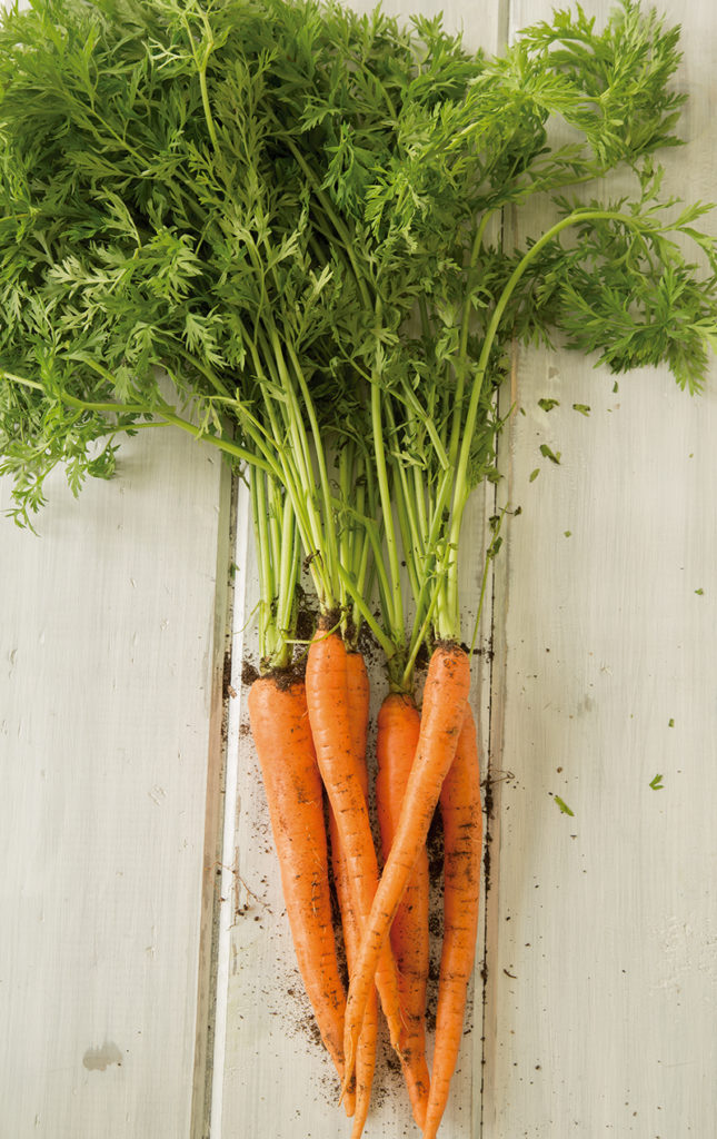 HOTabc: ingredientes de temporada - zanahorias-comida-verdura