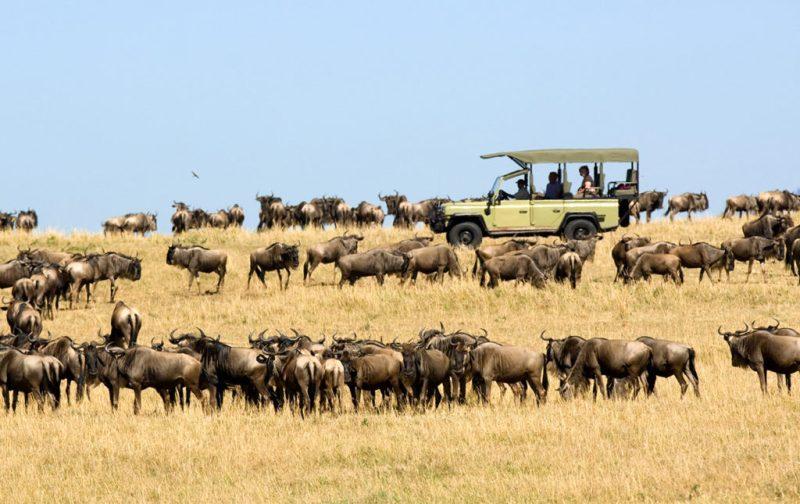 Viajes Planeta Azul, experiencias que marcan tu vida - antilope-animal-safari