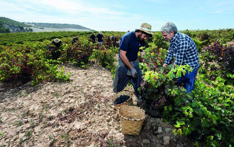 Bodegas Emilio Moro, tres generaciones de tradición vinícola - bodegas-emilio-moro-6