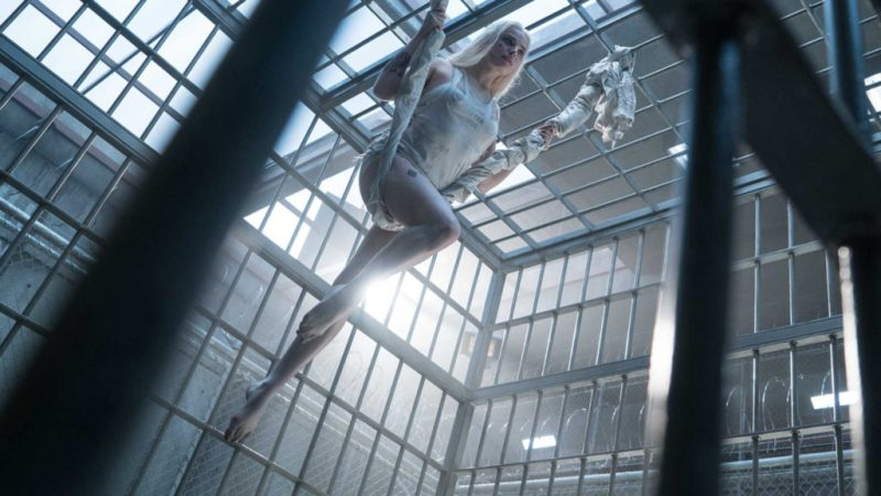 10 datos que probablemente no sabías sobre Margot Robbie - datos-curiosos-margot-robbie-2