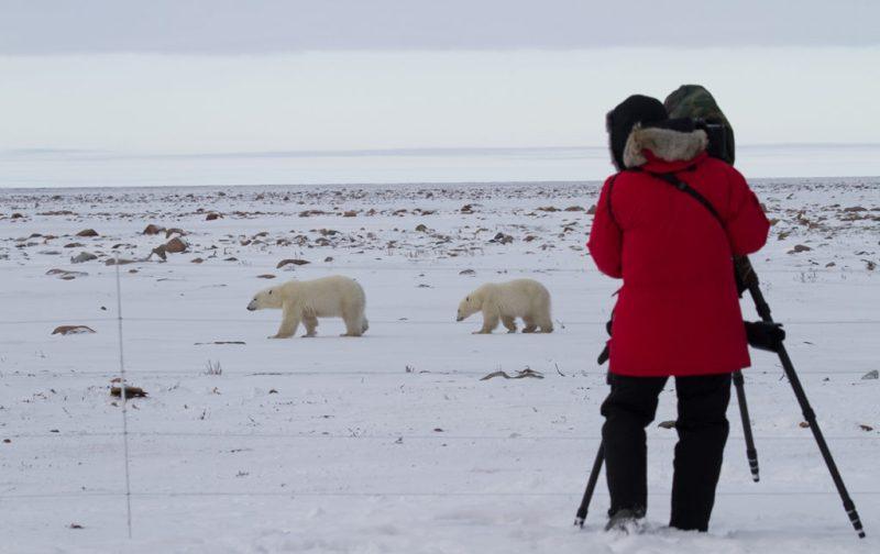 Viajes Planeta Azul, experiencias que marcan tu vida - nieve-frio-oso-polar-persona