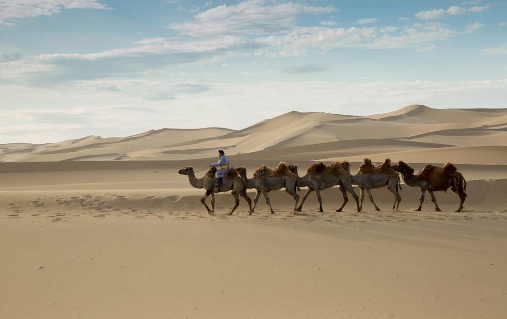 Mongolia, el lugar con un cielo eternamente azul - portada camellos desierto mongolia paisaje