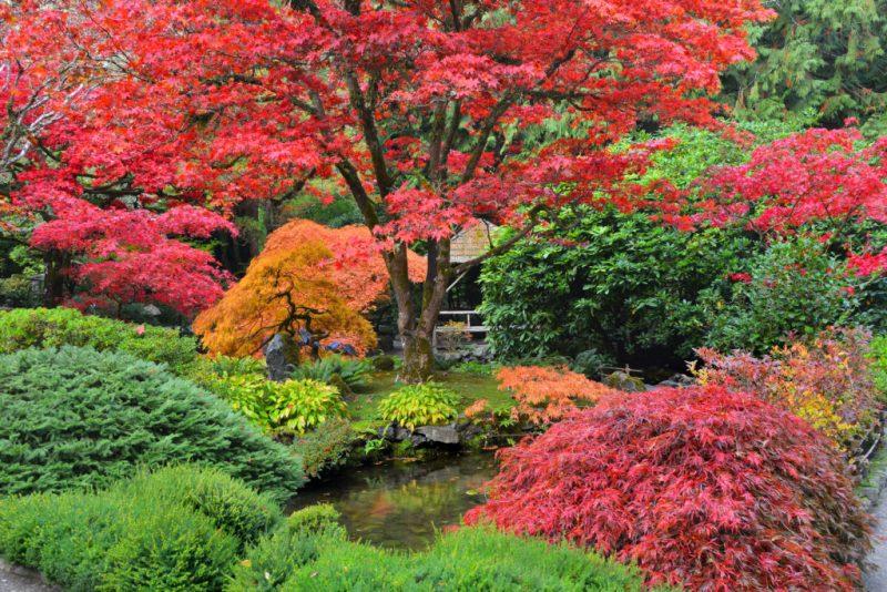 Los jardines botánicos más bonitos del mundo - butchart-gardens-canada