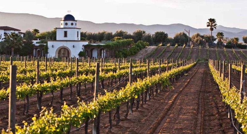 Los mejores viñedos de México - vincc83edos_casamadero